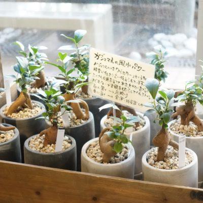 植物@IDEE自由が丘店